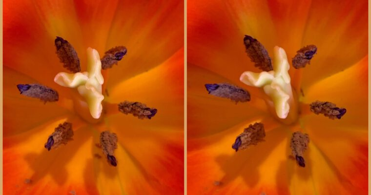 Macro stereo photography: a beginner's perspective